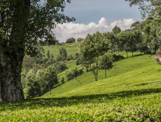 Kiambethu Tea Farm Homestay