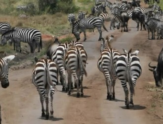 Great East Africa Wildlife Adventure